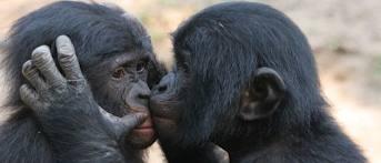 bonobos 2