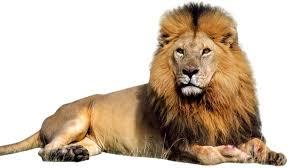 LION - Google images